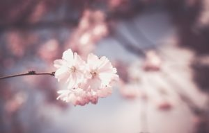 Proljeće na moje rame slijeće
