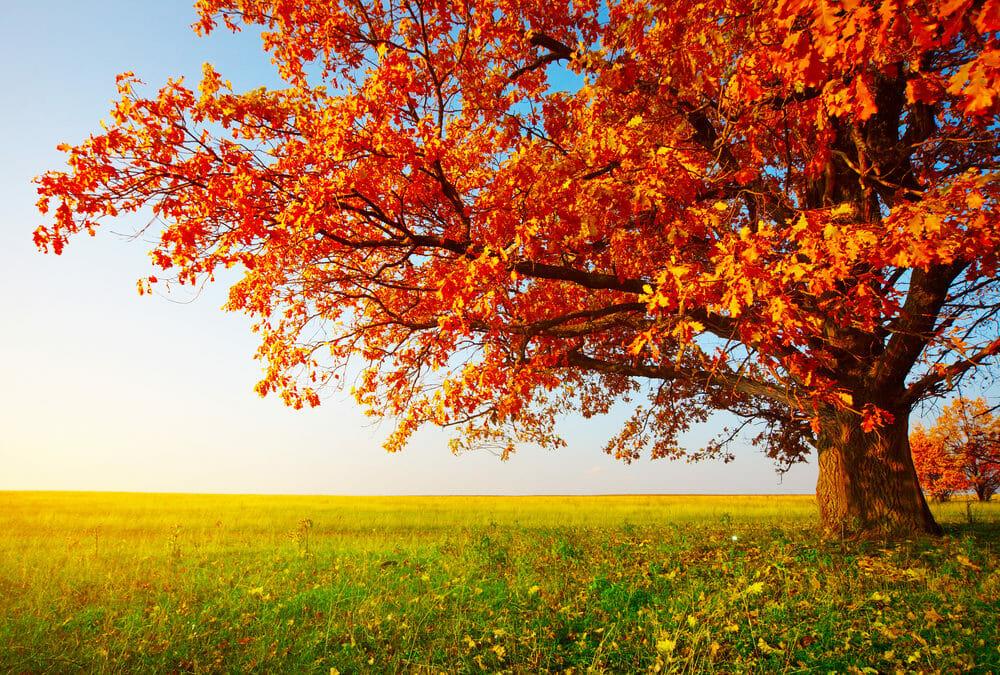 Jesen – obično godišnje doba, a zapravo učiteljica života.